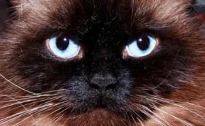 cat-wifi